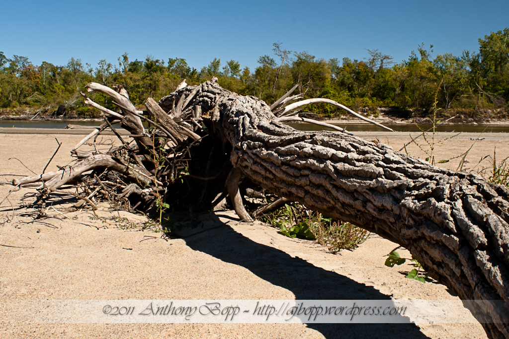 Beached Log