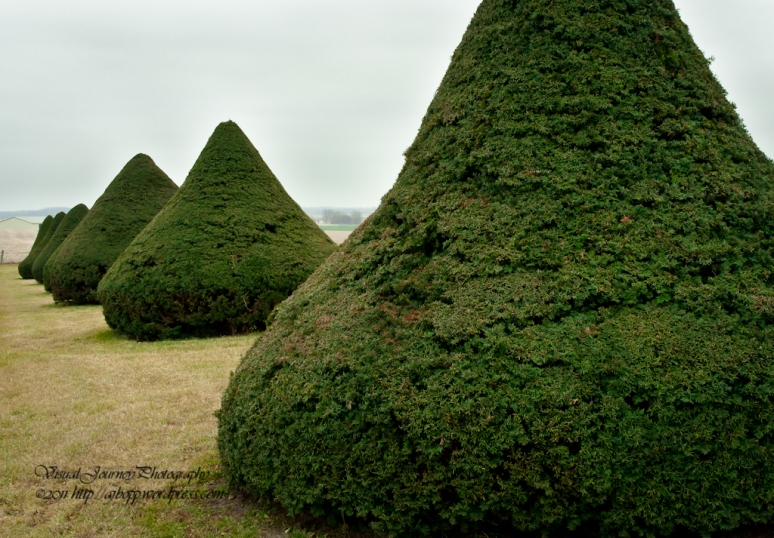 Evergreen Kiss