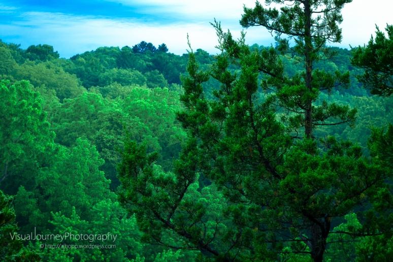 Emerald Morning