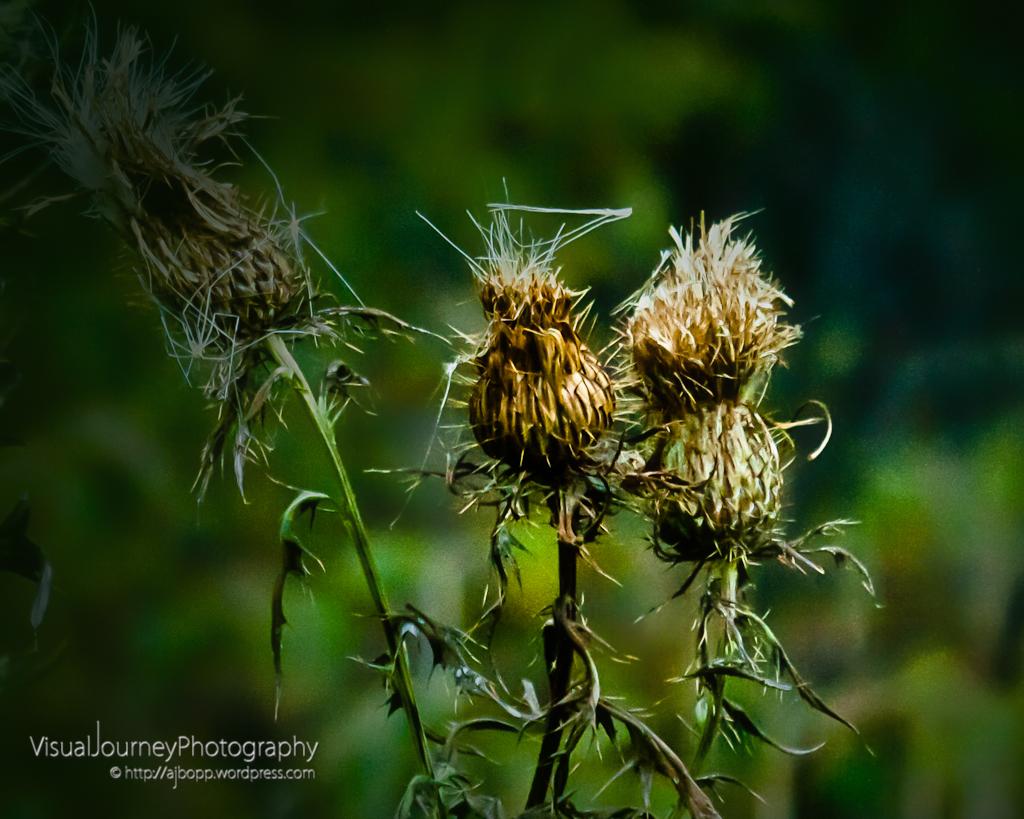Autumn Weeds