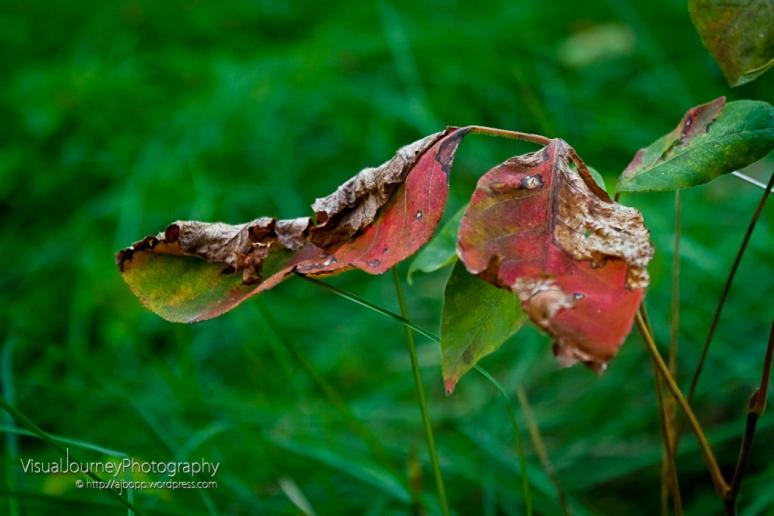 Turning Leaves