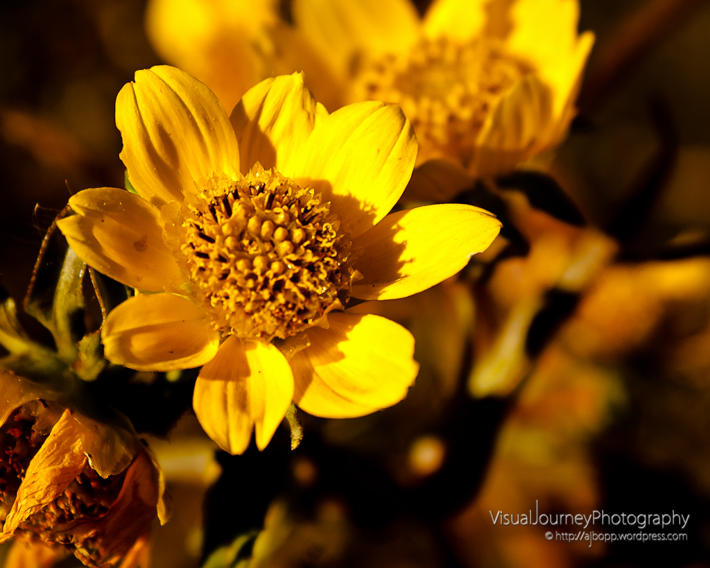Golden Autumn Flower