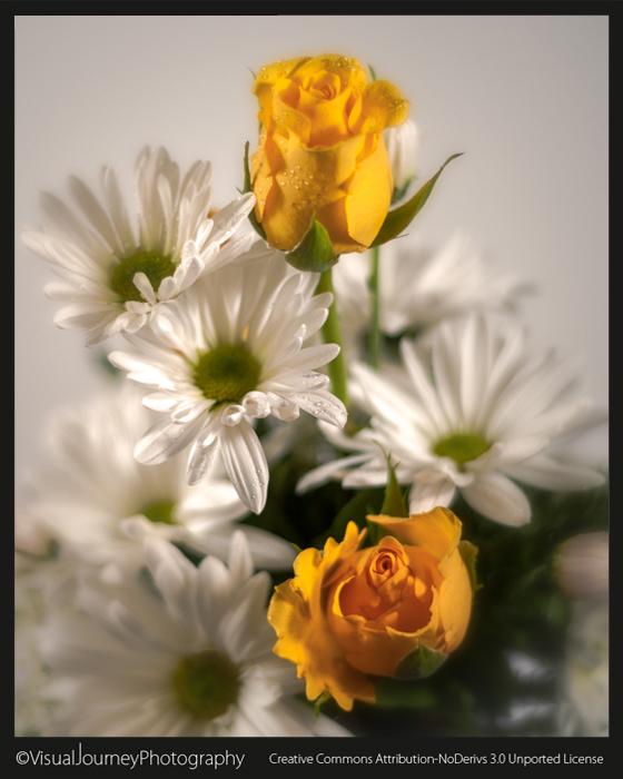 Studio Flowers 1